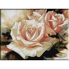 1449 - Trandafiri parfumati
