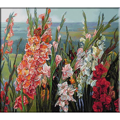 1912. Gladiole