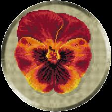 652. Panseluta rosie
