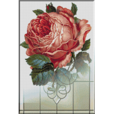 1191. Cristina - Trandafirul privighetorii indragostite