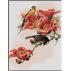 1634 - Floarea pasiunii
