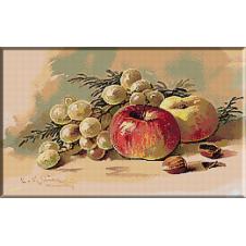 1855.Klein - Strugure alb parguit