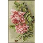 2000.Klein - Trandafiri roz