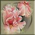 2104.Cristina - Orhidee