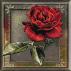 2140.Cristina.Trandafir rosu