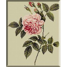 C040-Trandafir