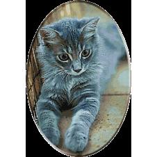 2394-kitten