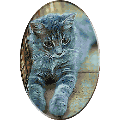 2394-коте