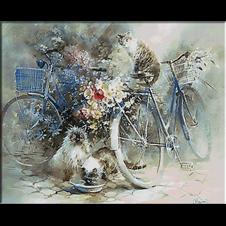 biciclete si pisici