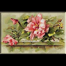 2610.Klein-Диви рози