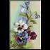 flori-panselute