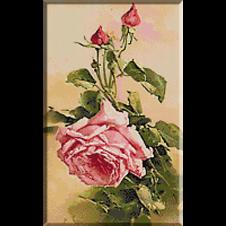 2612.Klein-Розова роза