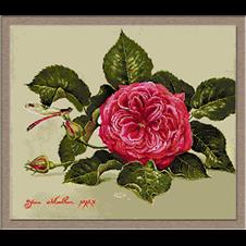 2628.pink rose