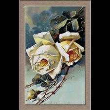 2754.Klein-White roses