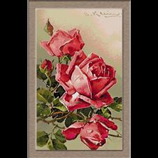 2756.Klein-Розови рози