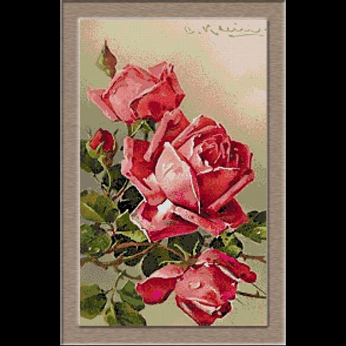 Klein - trandafiri