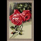 Klein - trandafiri rosii